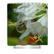 Peruvian Lilies 3 Shower Curtain