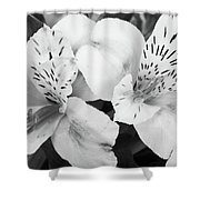 Peruvian Lilies  Flowers Black And White Print Shower Curtain