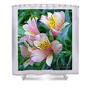 Peruvian Lily Of The Incas Shower Curtain