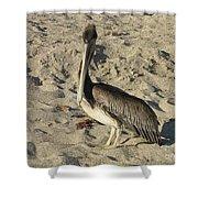 Peruvian Pelican Standing On A Sandy Beach Shower Curtain