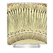 Pes Hipocampi Major Santiago Ramon Y Cajal Shower Curtain
