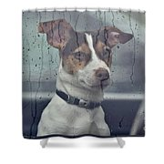 Pet Looking Out Car Window On Rainy Day Shower Curtain