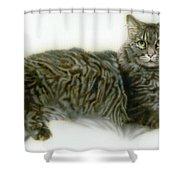 Pet Portrait - Buddy Shower Curtain