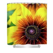 Petal Palette Shower Curtain