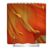 Petal Pusher Shower Curtain