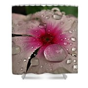 Petal Surfing Shower Curtain