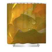Petals And Drops Shower Curtain