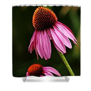 Petals And Quills Shower Curtain