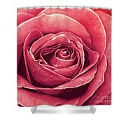 Petals Of A Rose Shower Curtain