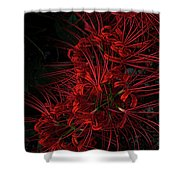 Petals Of Fireworks Shower Curtain