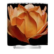 Petals Of Orange Sorbet Shower Curtain by DigiArt Diaries by Vicky B Fuller