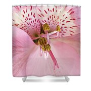 Petals Of Pink Shower Curtain
