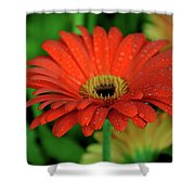 Petals With Droplets Shower Curtain