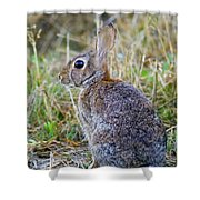 Peter Cottontail Shower Curtain