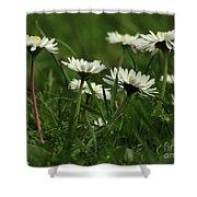 Petite Daisies 5 Shower Curtain