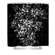 Petite Noir Petals Shower Curtain