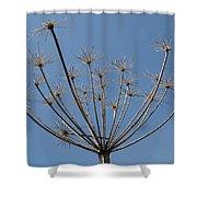 Petite Parasols Shower Curtain