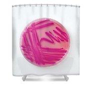 Petri Dish Of Acinetobacter Baumannii Shower Curtain
