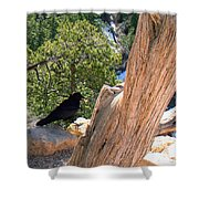 Petrified Raven At Grand Canyon Shower Curtain