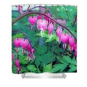 Pretty Little Bleeding Hearts Shower Curtain