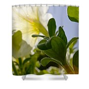Petunia And Sunflare Shower Curtain by Ray Laskowitz - Printscapes