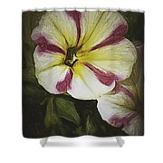 Petunia Sketch Shower Curtain