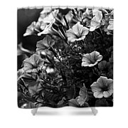 Petunias 1 Black And White Shower Curtain