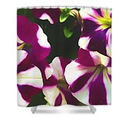 Petunias With A Flare Shower Curtain
