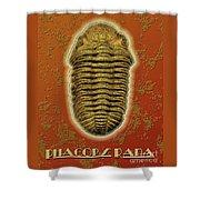 Phacops Rana Crassituberculata  Shower Curtain