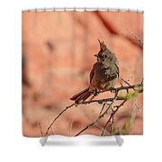 Phainopepla Shower Curtain