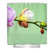 Phalaenopsis Shower Curtain