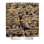 Pheasant On The Move Shower Curtain