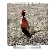 Pheasant Rooster Shower Curtain