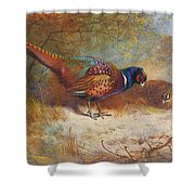 Pheasants By Thorburn Shower Curtain