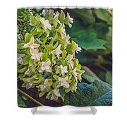 Philipsburg Manor - White Blossom Shower Curtain