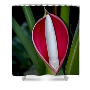 Philodendron Flower Shower Curtain