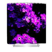 Phlox 1 Shower Curtain