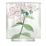 Phlox Acuminata Shower Curtain