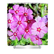 Phlox Beside The Road Shower Curtain