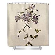 Phlox Reptans Shower Curtain