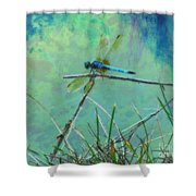 Photo Painted Dragonfly Shower Curtain