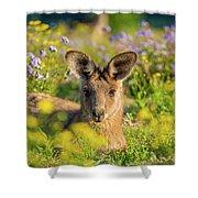Photogenic Kangaroo Shower Curtain