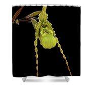 Phragmipedium Richteri Orchid Shower Curtain
