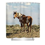 Picasso On The Horizon Shower Curtain
