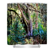 Picnic Time In Florida Shower Curtain