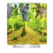Picturesque Vineyard At Sunset Shower Curtain