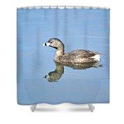 Pied-billed Grebe 2 Shower Curtain