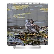 Pied-billed Grebe On Eggs Shower Curtain