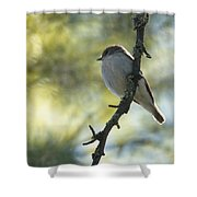 Pied Flycatcher 1 Shower Curtain