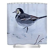 Pied Wagtail In The Snow Shower Curtain